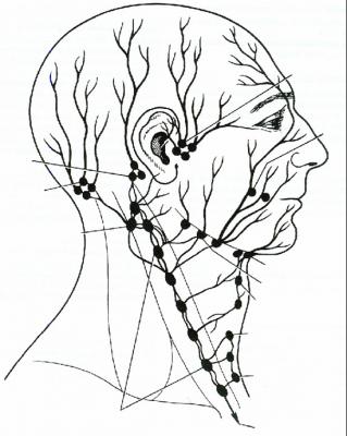 Sistema linfático