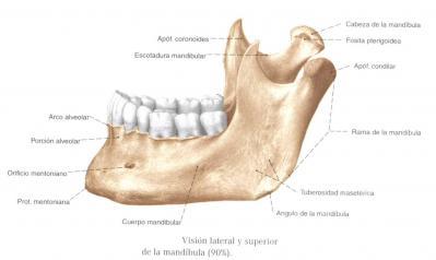 Maxilar Inferior (cara lateral)