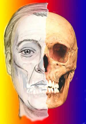 Cavidades comunes a cráneo y cara
